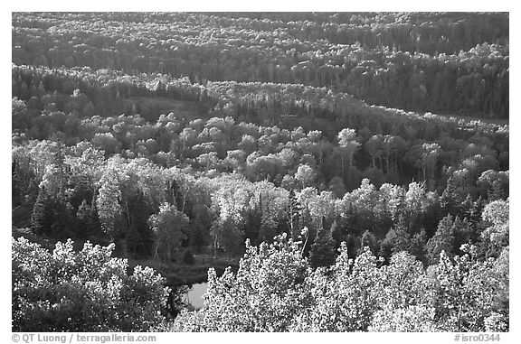 Forest seen  from Mount Franklin. Isle Royale National Park (black and white)