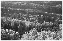 Forest seen  from Mount Franklin. Isle Royale National Park ( black and white)