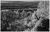 View over forests from Mount Franklin. Isle Royale National Park ( black and white)