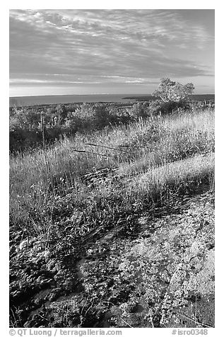 Grasses and Lake Superior seen  from  Greenstone ridge, morning. Isle Royale National Park (black and white)