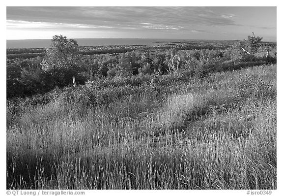 Grasses, distant forest and Lake Superior from  Greenstone ridge. Isle Royale National Park (black and white)
