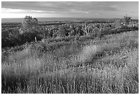 Grasses, distant forest and Lake Superior from  Greenstone ridge. Isle Royale National Park ( black and white)