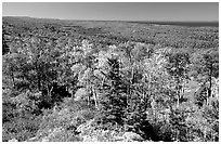 Forested view with Sargent Lake and Lake Superior in the distance. Isle Royale National Park, Michigan, USA. (black and white)