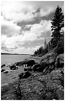 Tree, slabs, and oastine on the Stoll trail. Isle Royale National Park, Michigan, USA. (black and white)