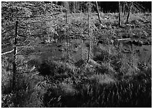 Beaver pond. Isle Royale National Park, Michigan, USA. (black and white)