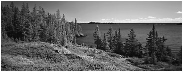 Lakeshore and trees. Isle Royale National Park (Panoramic black and white)