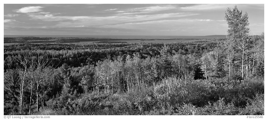 Fall landscape with forest stretching to lakeshore. Isle Royale National Park (black and white)