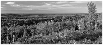 Fall landscape with forest stretching to lakeshore. Isle Royale National Park (Panoramic black and white)