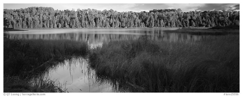 Forest landscape with grasses and lake. Isle Royale National Park (black and white)