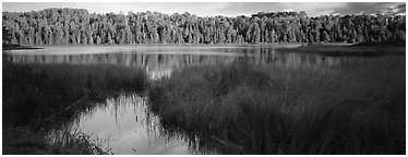 Forest landscape with grasses and lake. Isle Royale National Park (Panoramic black and white)