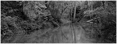 Spring forest scene with trees reflected in pond. Mammoth Cave National Park (Panoramic black and white)