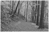 Trail covered with fallen leaves. Mammoth Cave National Park ( black and white)