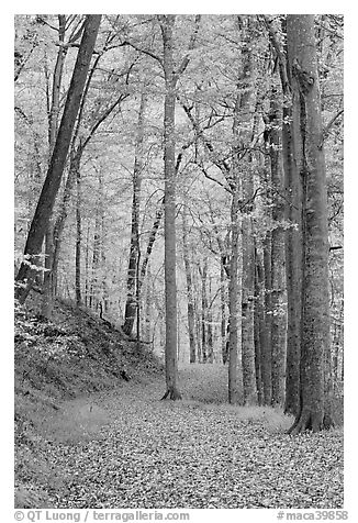 Trail in autumn forest. Mammoth Cave National Park (black and white)