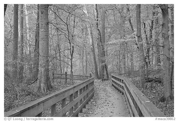Boardwalk in fall. Mammoth Cave National Park (black and white)