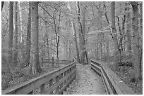 Boardwalk in fall. Mammoth Cave National Park, Kentucky, USA. (black and white)