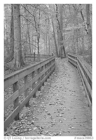 Wooden boardwalk in autumn. Mammoth Cave National Park (black and white)