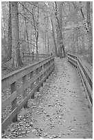 Wooden boardwalk in autumn. Mammoth Cave National Park, Kentucky, USA. (black and white)