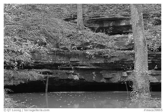 Limestone ledges, trees, and Styx spring. Mammoth Cave National Park (black and white)