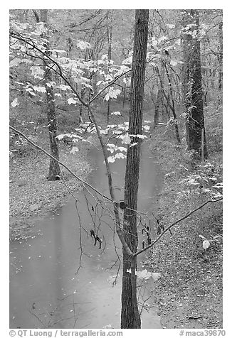 Trees with yellow leaves and Styx river during rain. Mammoth Cave National Park (black and white)
