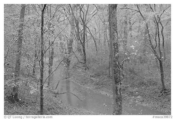 Styx spring and forest in autumn foliage during rain. Mammoth Cave National Park (black and white)