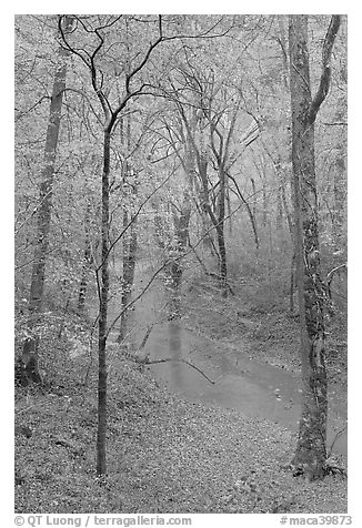 Styx stream and forest in fall foliage during rain. Mammoth Cave National Park (black and white)