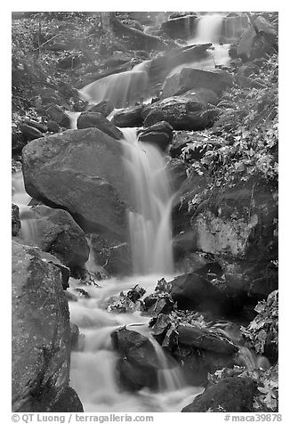 Cascading stream. Mammoth Cave National Park (black and white)
