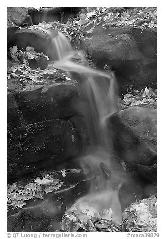 Stream, boulders, and fallen leaves. Mammoth Cave National Park (black and white)