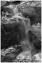 Stream, boulders, and fallen leaves. Mammoth Cave National Park, Kentucky, USA. (black and white)