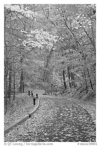 Paved trail and forest in fall foliage. Mammoth Cave National Park (black and white)