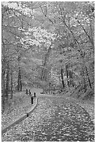 Paved trail and forest in fall foliage. Mammoth Cave National Park, Kentucky, USA. (black and white)