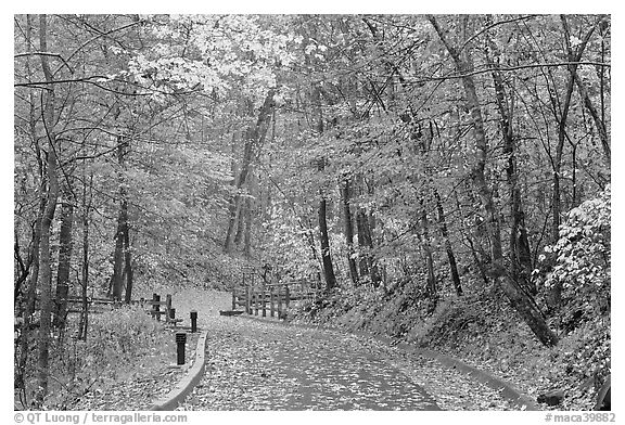 Trail leading to historic cave entrance in the fall. Mammoth Cave National Park (black and white)