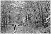 Trail leading to historic cave entrance in the fall. Mammoth Cave National Park, Kentucky, USA. (black and white)