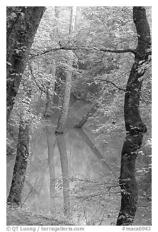 Trees reflected in green water of Echo River Spring. Mammoth Cave National Park (black and white)