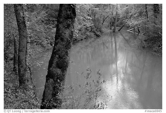 Echo River Spring. Mammoth Cave National Park (black and white)
