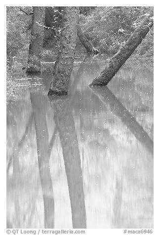 Trees and reflections in green waters of Echo River Spring. Mammoth Cave National Park (black and white)