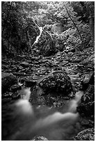 Falls of the Rose river. Shenandoah National Park ( black and white)