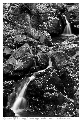 Cascades of the Hogcamp Branch of the Rose River with fallen leaves. Shenandoah National Park (black and white)