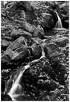 Cascades of the Hogcamp Branch of the Rose River with fallen leaves. Shenandoah National Park ( black and white)