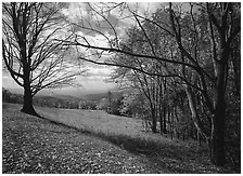 Meadow Overlook in fall. Shenandoah National Park ( black and white)