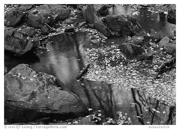 Reflections of trees in a creek with fallen leaves. Shenandoah National Park (black and white)