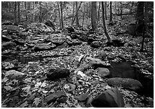 Forest floor, boulders, and trees in fall. Shenandoah National Park, Virginia, USA. (black and white)