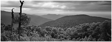 Hillside, forest and ridges in early summer. Shenandoah National Park (Panoramic black and white)