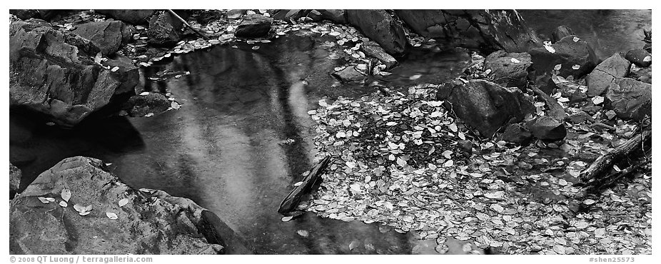 Autumn close-up of pond with fallen leaves and rocks. Shenandoah National Park (black and white)