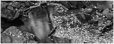 Autumn close-up of pond with fallen leaves and rocks. Shenandoah National Park (Panoramic black and white)