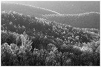 Trees and ridgelines in the spring, late afternoon. Shenandoah National Park, Virginia, USA. (black and white)