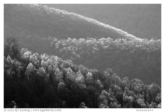 Trees and ridgelines in the spring, late afternoon. Shenandoah National Park (black and white)