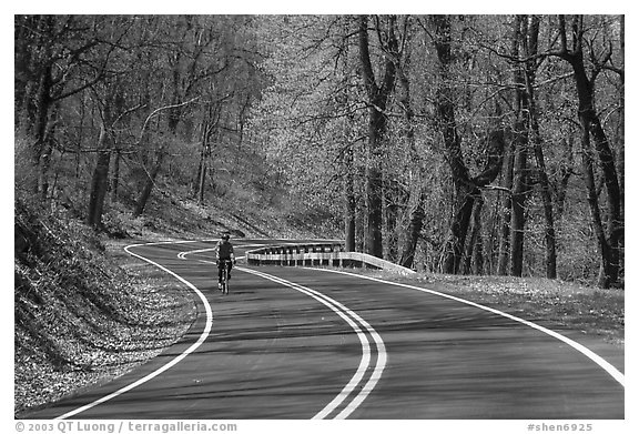 Bicyclist on Skyline drive. Shenandoah National Park (black and white)