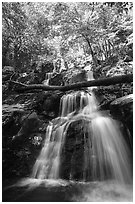 Dark Hollow Falls. Shenandoah National Park, Virginia, USA. (black and white)