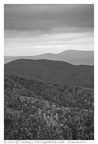 Hillside and receding ridges in Autumn. Shenandoah National Park (black and white)