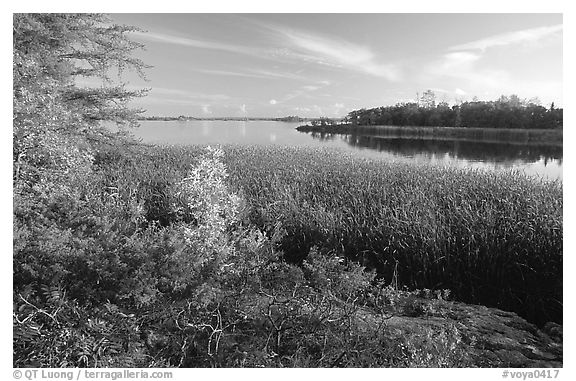 Grasses at Black Bay narrows. Voyageurs National Park (black and white)